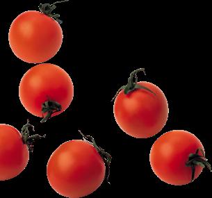 Tomates - Le Minuscule